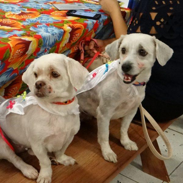 Desfile Pet Caipira diverte público e arrecada ração para ONG