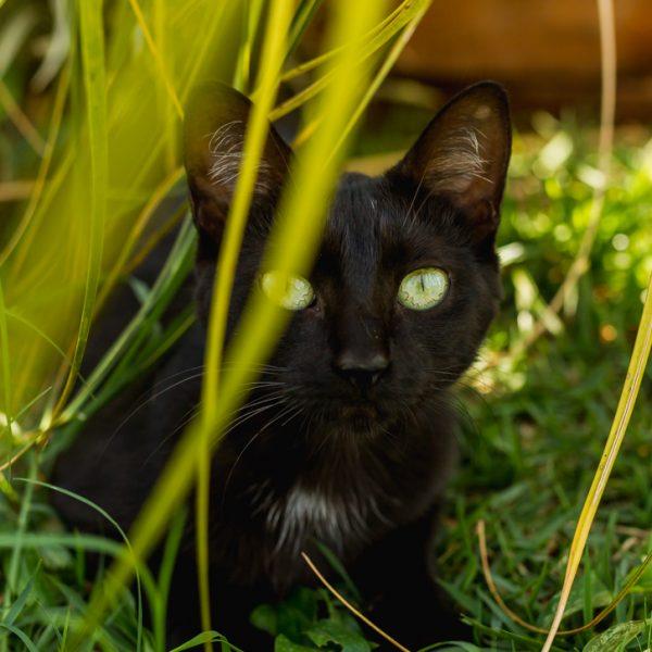 Shopping realiza ação on-line para adoção de animais